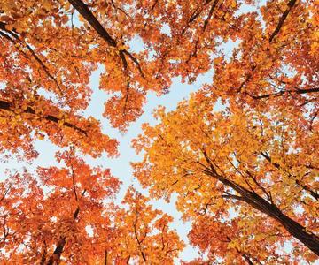 10 consejos para capturar fotos de otoño a todo color