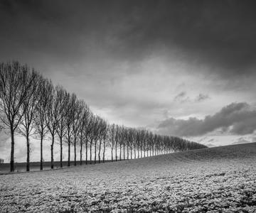 Cómo dominar la fotografía en blanco y negro