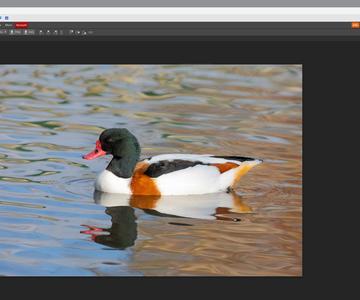 Cómo editar fotos en línea con Photopea