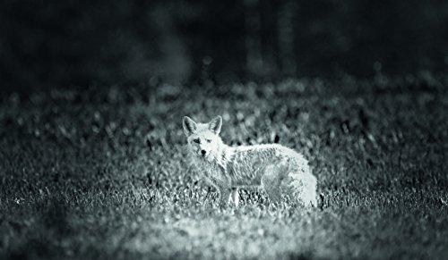 Bresser 3x14 Dispositivo Digital de Visión Nocturna con Función de Grabación